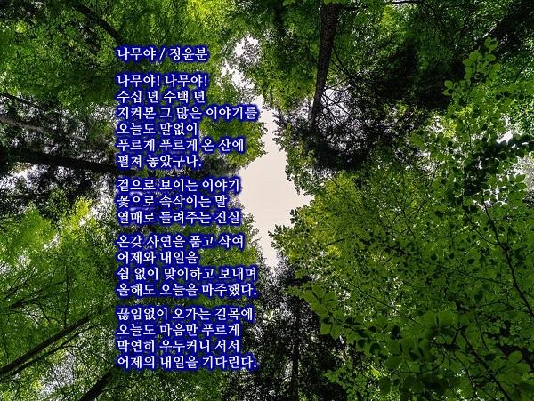 정윤분-나무야.jpg