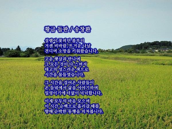 송창환-황금 들판.jpg